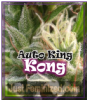 Dr Underground Auto King Kong Feminised 4 Seeds